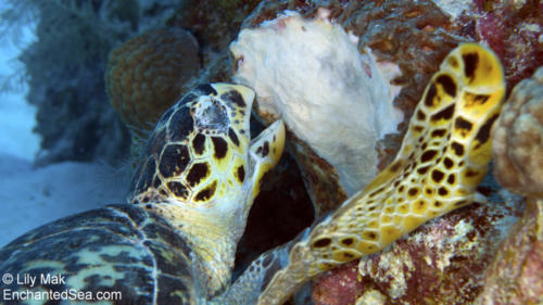 Turtle 4, Underwater Image from Grand Cayman